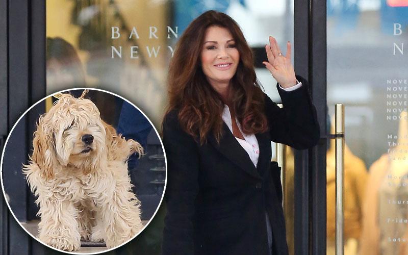 ken todd lisa vanderpump new dog